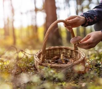 Dekalog współczesnego grzybiarza: złote zasady grzybobrania