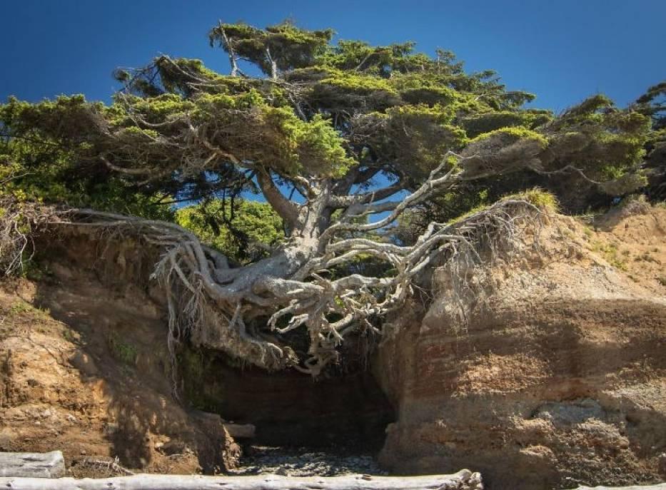 Nigdy nie będziesz takim twardzielem jak te drzewa. One po prostu nie chcą się poddać!