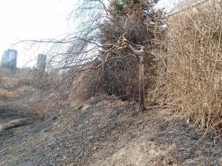 Czuby: Unikniemy pożarów kosząc trawy jesienią
