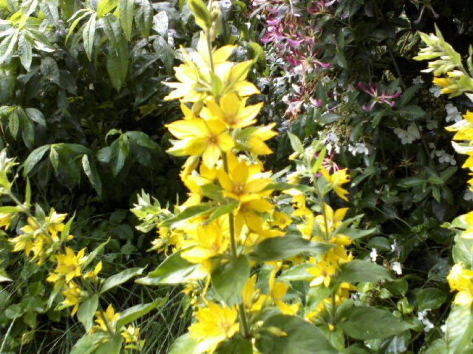 Symbioza roślinna, czyli tłoczno, ale kolorowo