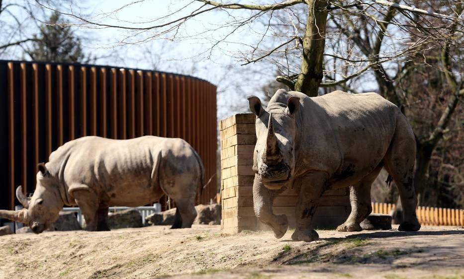 Zwierzęta w Śląskim Ogrodzie Zoologicznym