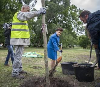 Ulice Warszawy wzbogacą się o nowe drzewa. Do końca roku pojawi się 6 tysięcy nasadzeń