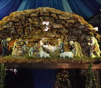 U franciszkanów w Kolanie pod Wieżycą powstał największy na Kaszubach żłóbek  ZDJĘCIA