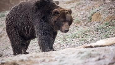 azjatyckie niedźwiedzie porno Lesbijki mamuśki film