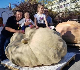 W Krapkowicach zważono dynię, która miała 746,5 kg!