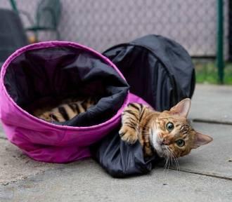 Hotel dla kotów w Toruniu? Zobaczcie zdjęcia!