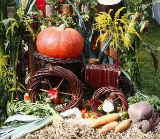 """""""Warzywa, owoce, kwiaty"""" - wystawa w Ogrodzie Botanicznym"""