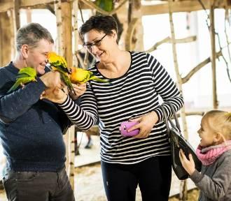 Babcie i dziadkowie świętują w Bydgoszczy [zdjęcia]