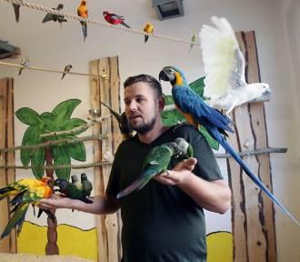 Papugarnia przy ulicy Drohobyckiej atrakcją w Legnicy [ZDJĘCIA]