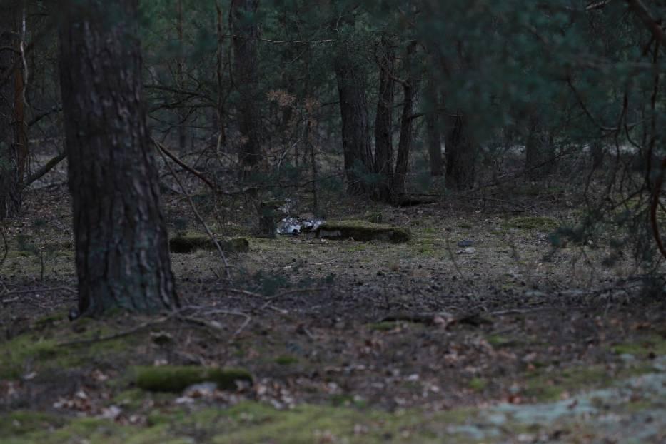 Zielona Góra Jeleniów. Czy ten cmentarz skrywa mroczną tajemnicę? Zobaczcie zdjęcia zapomnianych mogił sprzed lat