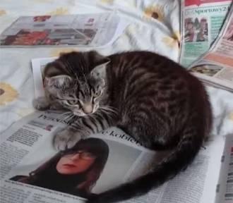 Lubuska w łapach kota. Nie mógł się oderwać! Zobaczcie film
