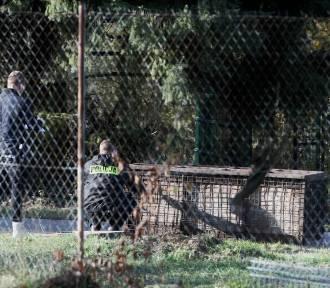 Wszystkie tygrysy żyją! Zobacz zdjęcia z akcji ratunkowej