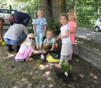 Przedszkolaki z Dębskiej Kuźni sadziły owocowe drzewka, maliny i jeżyny