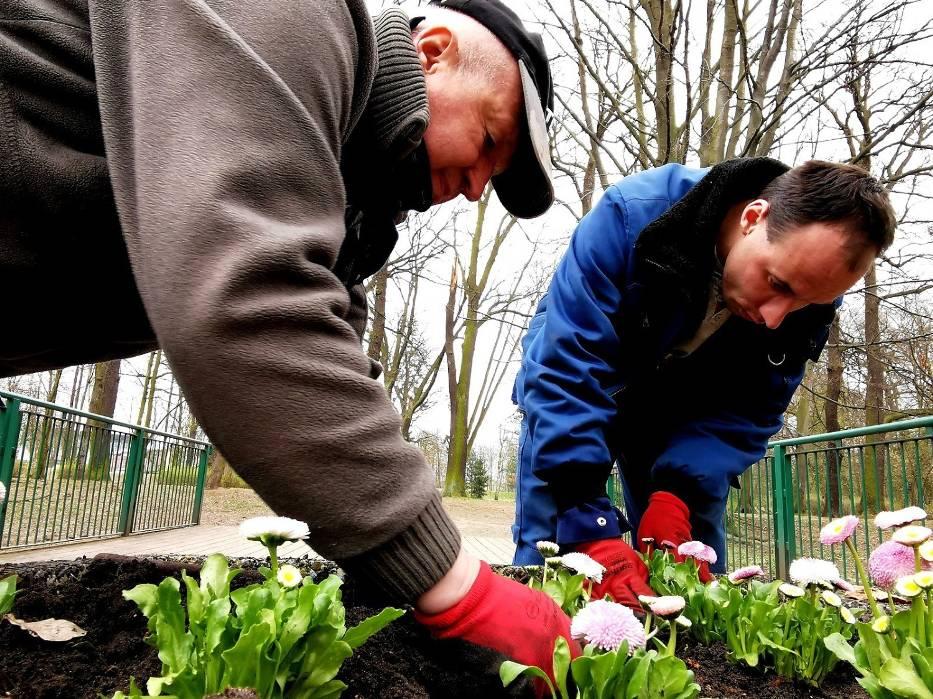 Kalisz: W mieście trwają wiosenne nasadzenia kwiatów i krzewów
