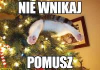 Memy Ze Zwierzetami I Choinka Naszemiastopl