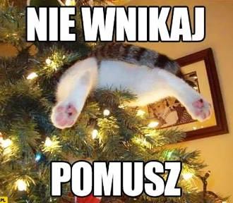 Kot plus choinka równa się katastrofa?  Najlepsze świąteczne memy ze zwierzętami i choinką!