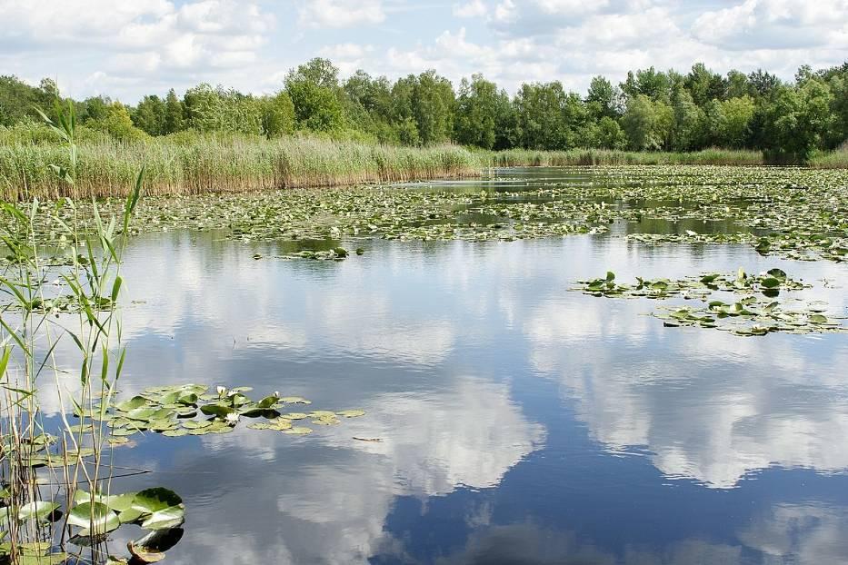 Jezioro Torfy