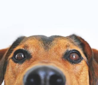 Pies to nie prezent! Apelują pracownicy schroniska dla zwierząt
