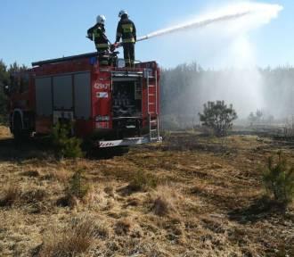 Człuchów, gmina Koczała. Niebezpieczne pożary traw - w Trzyńcu spłonęło 1,5 ha w pobliżu zabudowań