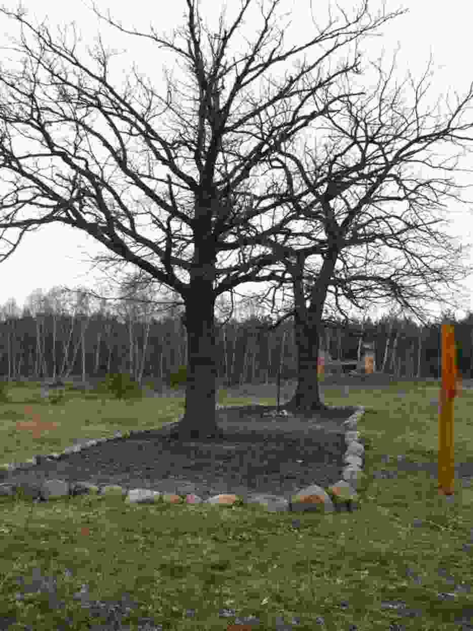 Mogiła żołnierzy napoleońskich znajduje się jak dawniej - w lesie na obrzeżach Żagania, nieopodal sektora zachodniego byłego obozu Stalag Luft III