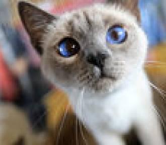 Co wiesz o kotach? Sprawdź z nami swoją wiedzę!