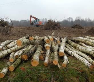 Prezydent Częstochowy umorzył postępowanie w sprawie wycinki drzew na Wiolinowej