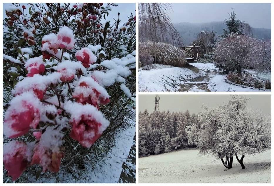 Śnieg przykrył wciąż kwitnące jeszcze kwiaty