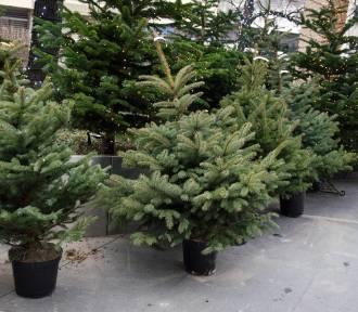"""Warszawska zbiórka choinek. Po świętach """"drzewka wzbogacą miejskie tereny zieleni"""""""