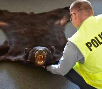 Mieszkaniec powiatu jarosławskiego chciał sprzedać skórę z niedźwiedzia w Internecie