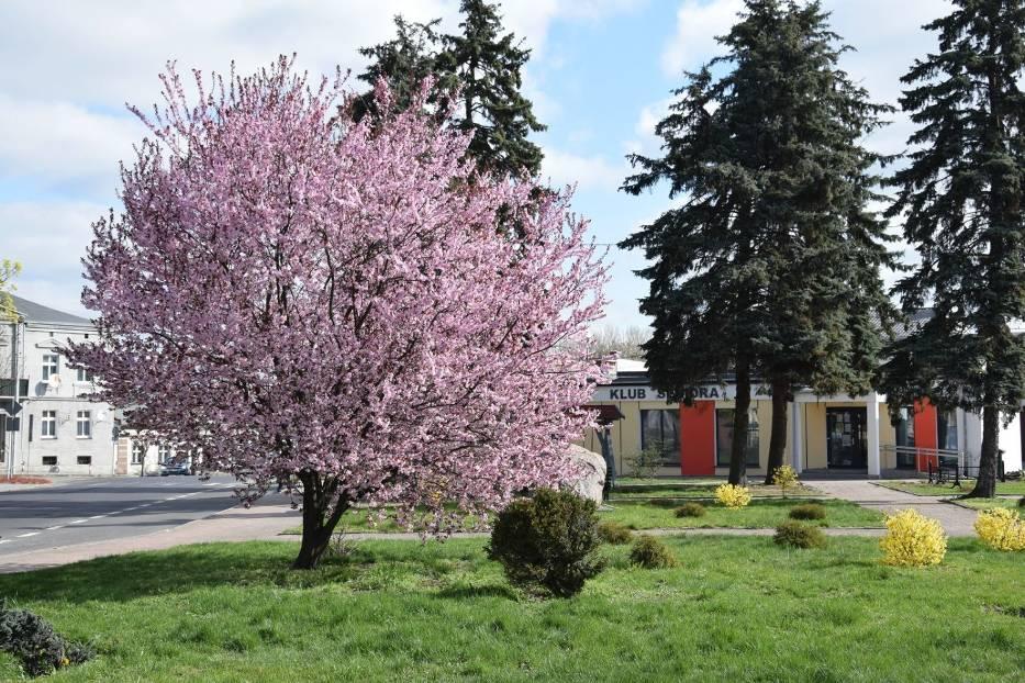 Wiosenne porządki i nasadzenia w naszej gminie