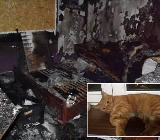 Chrzanów. Ogień zabrał im dobytek życia oraz ukochaną kotkę