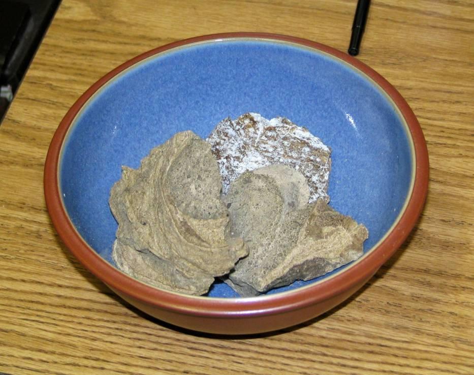 AmbraAmbra, czyli wydzielina z przewodu pokarmowego kaszalota, jest niezwykle cenną substancją w perfumiarstwie