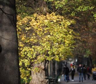 Środa będzie pochmurna z opadami deszczu. To koniec pięknej jesieni?