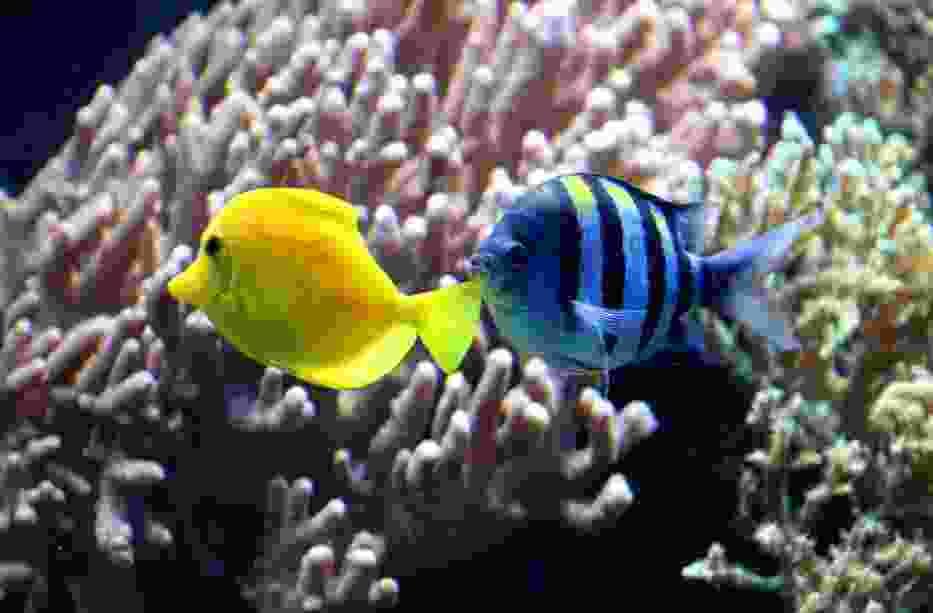 Oceanarium w Blue City