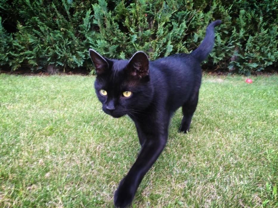 czarny kot nastolatek nago seks com