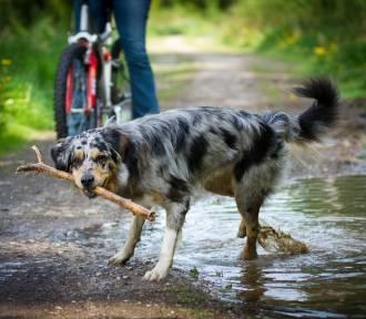 Psacery. Łódzcy artyści zachęcają do wiosennych spacerów z psami