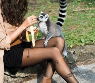 Gabriella stworzyła rajstopy na 80-lecie łódzkiego zoo