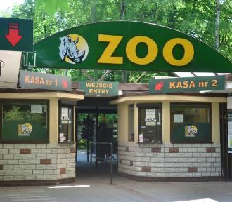 Zoo odwołuje ważne transporty zwierząt. Nie odbędą się lubiane wystawy