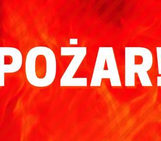 Pożar samochodów ciężarowych w Krosnowicach (ZDJĘCIA)