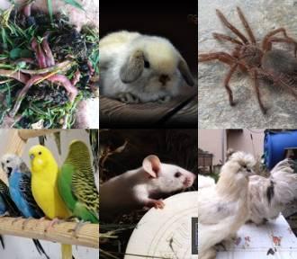 Wiewiórka, dżdżownice, pająki... Te zwierzęta kupisz od ręki!
