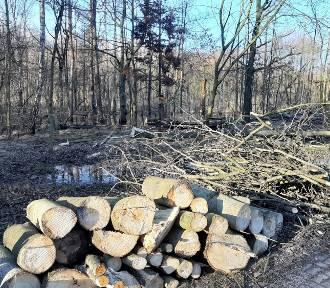 W Dolinie Trzech Stawów wycięto kilkadziesiąt drzew. To przez rozlewisko ZDJĘCIA