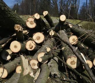 Będzie wycinka 20 drzew w sąsiedztwie Parku Wełnowieckiego