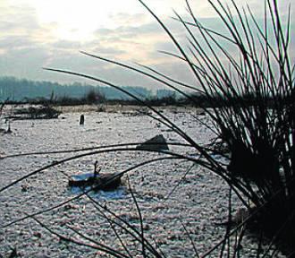 Śląskie Ekologicznie: Fundusz dla regionu. Dowiedz się, na co możesz liczyć za rok?