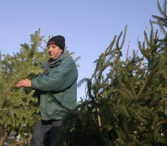 Naturalne choinki w Zagłębiu. Gdzie będzie można kupić drzewka?