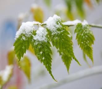 IMGW wydał ostrzeżenie meteorologiczne. W Małopolsce będzie mocno padał śnieg