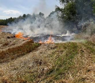 Pożar w Mechowie (sierpień 2019)    ZDJĘCIA