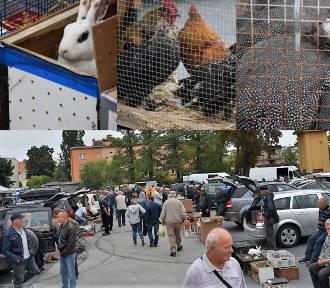 W Sławnie tłumy na targu w niedzielę. Tu kupisz królika, czy kurę lub gołębia ZDJĘCIA