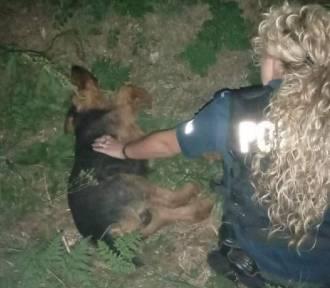 Ranny pies uratowany dzięki reakcji przechodnia