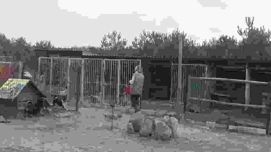 Przytulisko dla zwierząt w Rachowie Starym
