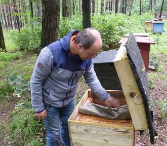 Zgnilec amerykański atakuje pszczoły w powiecie radomszczańskim